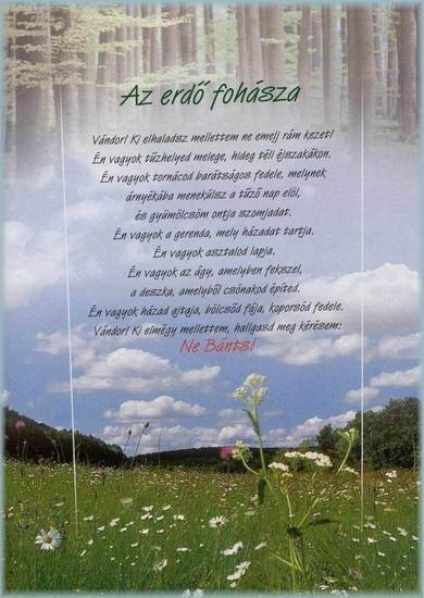 reiki idézetek Az erdő fohásza,Mi emberek,Angyalos idézetek ,Uram, szerelmed  reiki idézetek